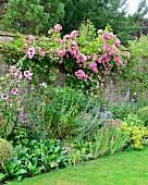 Beet mit blühenden Stauden und rosa Kletterrose an Gartenmauer