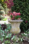 Mit Frühlingsblumen bepflanzte Amphore aus Stein im Blumenbeet