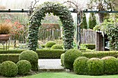 Ivy-covered trellis arch and box balls in garden