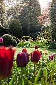 Bed of colourful tulips in extensive gardens