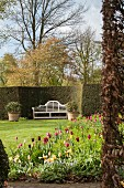 Bed of colourful tulips and white bench in expansive gardens