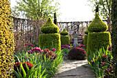 Gartenkunst umgeben von Tulpen und Hainbuchenhecke