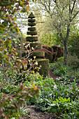 Blumenbeete und in Topiaria-Kunst geschnittenem Buchsbaum