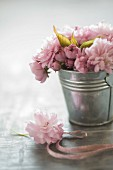 Zinc bucket of Japanese cherry blossom