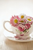 Daisies in floral teacup
