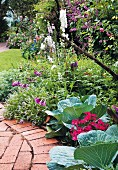 Cabbages in flowering garden