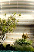 Tropical plants against façade clad with horizontal wooden laths