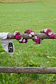 Garland of Sweet Williams wrapped around wooden fence beam