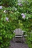 White chairs in secluded seating area in garden seen through lilac bush