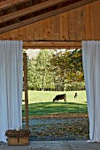 View of grazing cow from terrace of wooden house