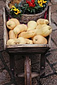 Butternut squashes and colourful chilli plaints in wooden wheelbarrow