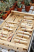 Wooden markers for labelling herbs in garden in front of small potted lavender plants
