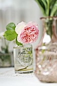 Double rose (English rose) in vintage-style vase