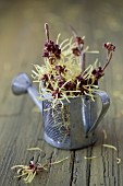 Witch hazel flowers in watering can ornament