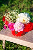 Dahlias of various colours in red vintage pot outdoors