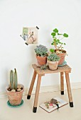 Potted succulents on rustic wooden stool below vintage postcard stuck on wall