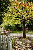 Tables and chairs around tree in sunshine