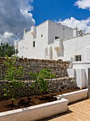 Lemon trees in narrow raised bed against stone wall