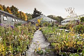 Perennials nursery in autumn