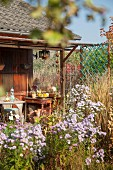 Hut with terrace in autumnal allotment garden