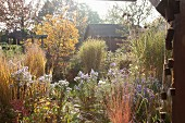 Wooden hut amongst herbaceous borders in autumnal garden