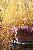 Sedum in terracotta window box in front of yellow autumnal grasses