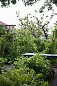 Weg zwischen Obstbäumen und dichtem Grün im Garten