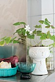 Turquoise glass bowl next to white-flowering lucky shamrock in white china pot