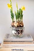 Narcissi planted in jam jar on stacked books