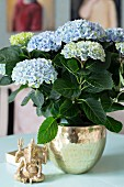 Blue hydrangea planted in brass pot next to Ganesha figurine