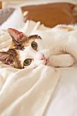 Katze liegt auf dem Bett