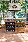 Plants and china crockery on and in antique chest of drawers in sunny greenhouse