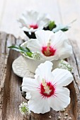 White hibiscus flowers in small bowls on wooden board