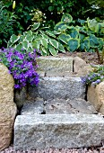 Granite garden steps, purple aubretia and hosta leaves in front of hedge