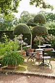 Metal folding chairs at round garden table and topiary box trees in summery garden