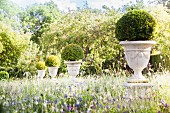 Mit Buchsbaumkugeln bepflanzte, erhöhte Gartenamphoren zwischen blühenden Wiesenblumen