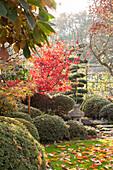 Herbstlicher Garten im asiatischen Stil