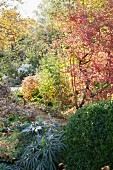 Autumn colours in herbaceous borders