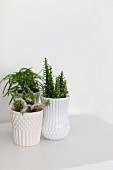 Three succulents in white pots with structured surfaces