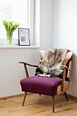 Fur blanket on 50s armchair below window