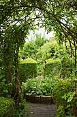 View into green garden through trellis archway