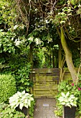 View through weathered garden gate into enchanting garden