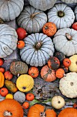 Various ornamental gourds and edible pumpkins on wooden surface