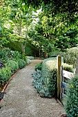 Garden path in a lush green summer garden