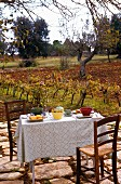 Rustic set table on terrace amongst grape vines