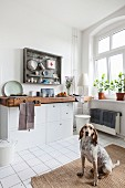 Dog sitting in kitchen of period apartment with old workbench used as worksurface