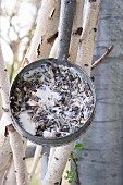 Vintage pan filled with coconut oil and bird food hung from slender birch trunks