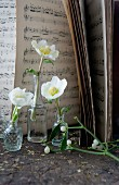 Hellebores in small glass bottles in front of sheet music
