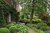 Paved path leading past herbaceous borders, box spheres and old beech tree to ivy-covered brick façade