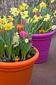 Brightly coloured pots of spring flowers